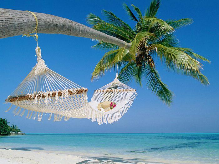 vanuatu-board-wallcoo_com_beach_coconut_palm_55071