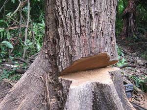 1-Scarf-Tree-300x225