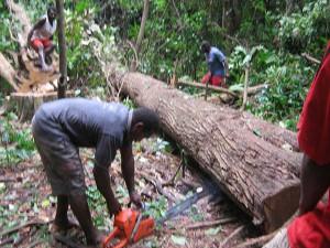 3-Log-Down-300x225