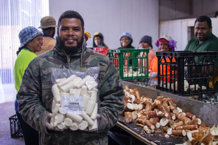 Cassava grown for Vanuatu workers turns into potential money-maker for NT mango farmer