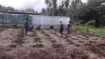 World Bank supports communities with planting materials