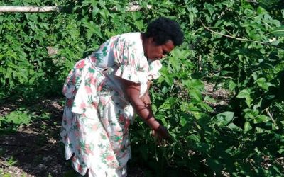 Agriculture to receive one billion vatu as business feels COVID-19 impact