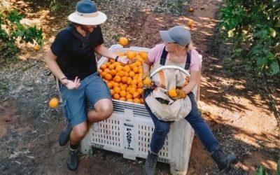 Fruit pickers from Vanuatu exempt from Australia's border closures