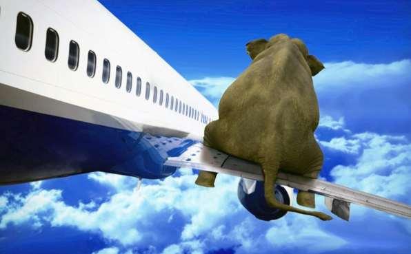 The Elephant on the Plane